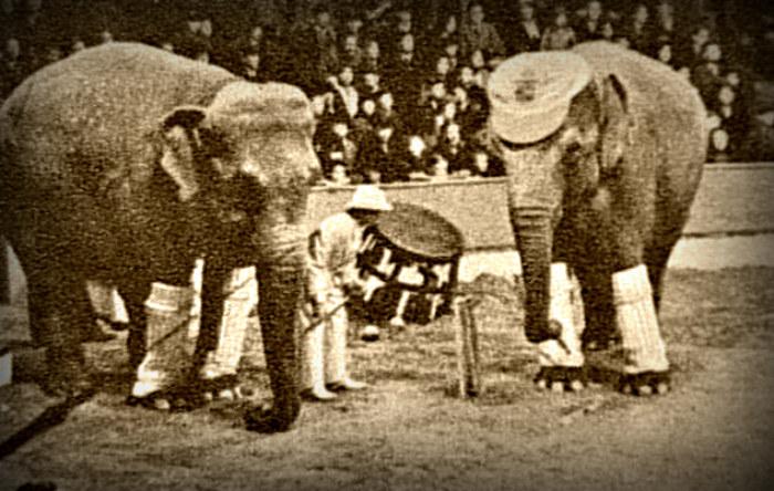 Występy słoni cieszyły się ogromną popularnością, ale przypadek słonicy Mary przyczynił się do tego, że wielu zaczęło się bać tych zwierząt /materiały prasowe