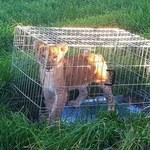 Wyszedł na poranny jogging. Znalazł porzucone w klatce... lwiątko