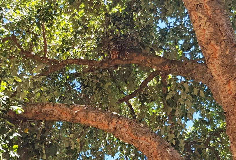 Wytęż wzrok - wśród gałęzi dojrzysz sowę /INTERIA.PL
