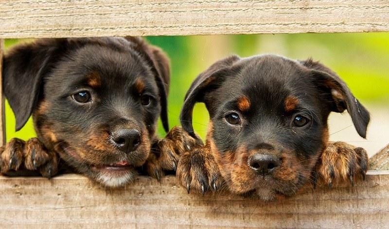 Wyższe mandaty dla właścicieli psów! /Pixabay.com