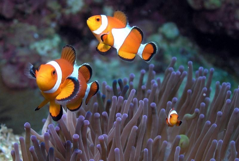 Wzdłuż wybrzeży rozciągają się zachwycające obfitością fauny i flory rafy koralowe  /© Panthermedia