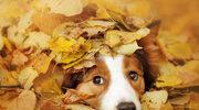 Wzmocnij odporność psa