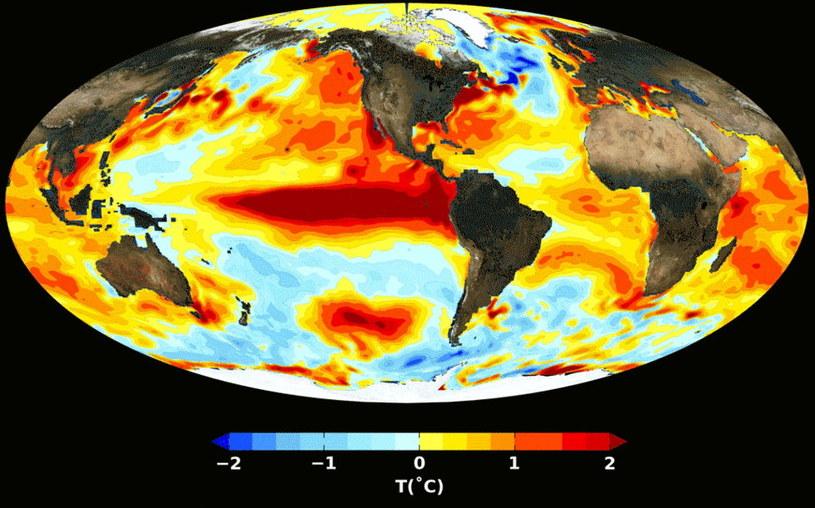 Wzorce temperatury powierzchni oceanu podczas El Nino /materiały prasowe