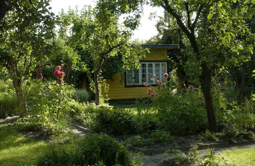 Wzrosło zainteresowanie ogródkami działkowymi. /Wojtek Laski /East News