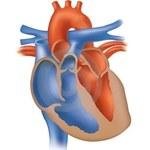 Xbox 360 wykrywa wady serca