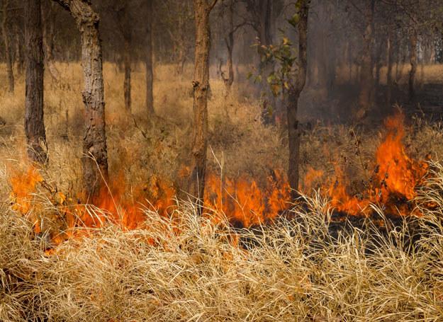 Z danych strażaków wynika, że pożary lasów, to w większości pożary nieduże/ Zdjęcie ilustracyjne /123RF/PICSEL
