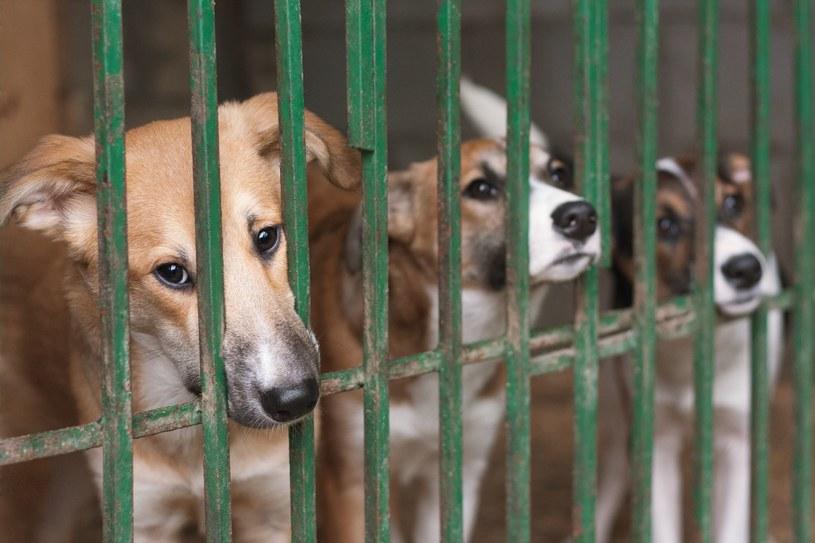 Z laboratorium uwolniono około 200 zwierząt. Mają trafić do adopcji; Zdj. ilustracyjne /123RF/PICSEL