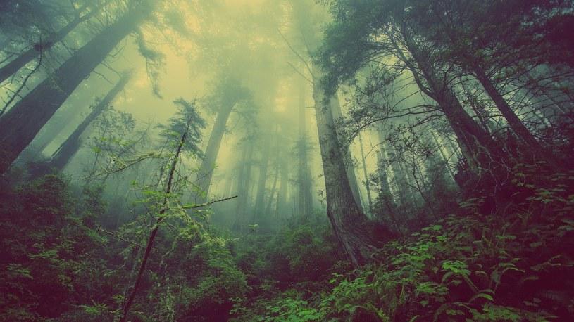Z najnowszego raportu wynika, że Deklaracji nowojorskiej dotyczącej lasów nie uda się wypełnić /pixabay.com