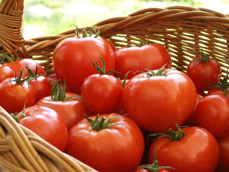Z odpadów po pomidorach będą produkowane elementy wyposażenia samochodów /123RF/PICSEL