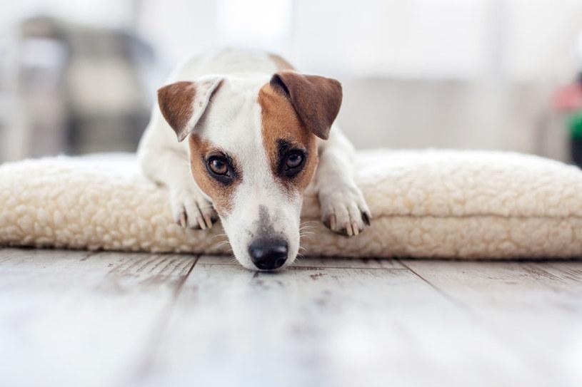 Z posiadania psa wynika wiele walorów /123RF/PICSEL