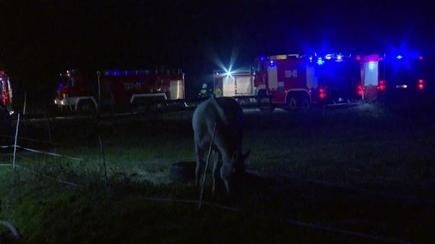 Z pożaru udało się uratować 9 koni /TVN24/x-news