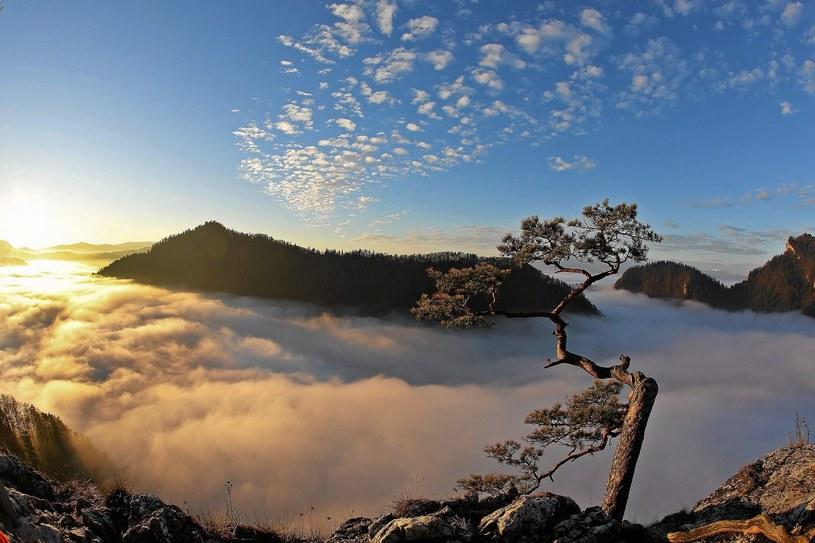 Z Sokolicy roztacza się bajkowy widok na Przełom Dunajca. Przy wschodzie Słońca dolina często pokryta jest gęstymi mgłami /Marek Podmokły /