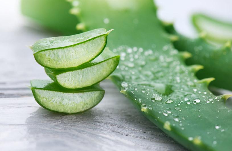 Z sześciu liści wydrąż miąższ i wrzuć do miski, dodaj pół litra soku z cytrusów, zmiksuj /123RF/PICSEL