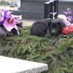 Z tęsknoty zamieszkał na cmentarzu. Spał na grobie właściciela?
