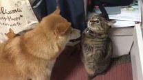 Z tym kotem lepiej nie zadzierać. Przekonał się o tym jego psi kumpel
