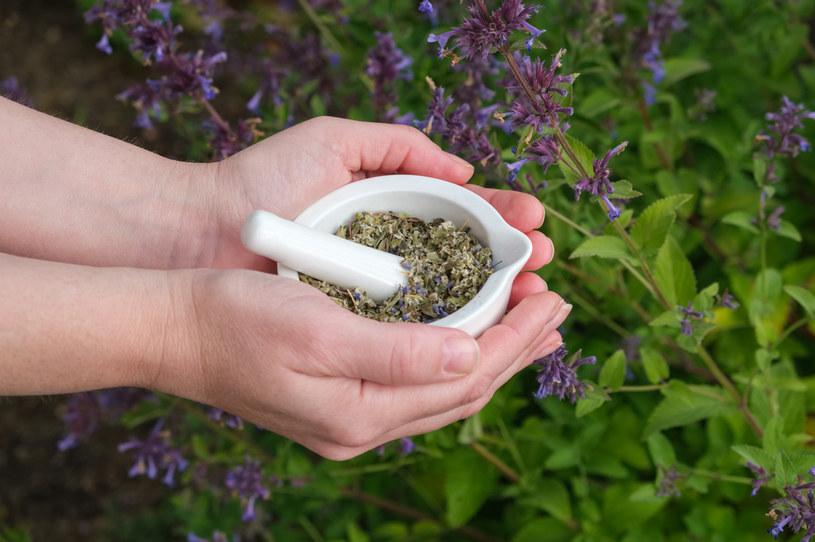 Z większości suszonych ziół bez kłopotu przygotujemy napar - herbatkę o działaniu leczniczym /123RF/PICSEL