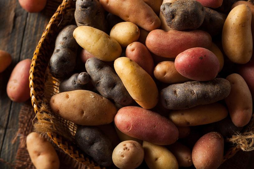 Z ziemniaków możemy być dumni! /123RF/PICSEL