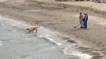 Za 2,5 mln zł poszerzyli plażę. Zabrał ją sztorm