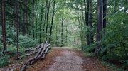 Za kilka lat zniknie 75 proc. drzew z polskich lasów? Naukowcy alarmują