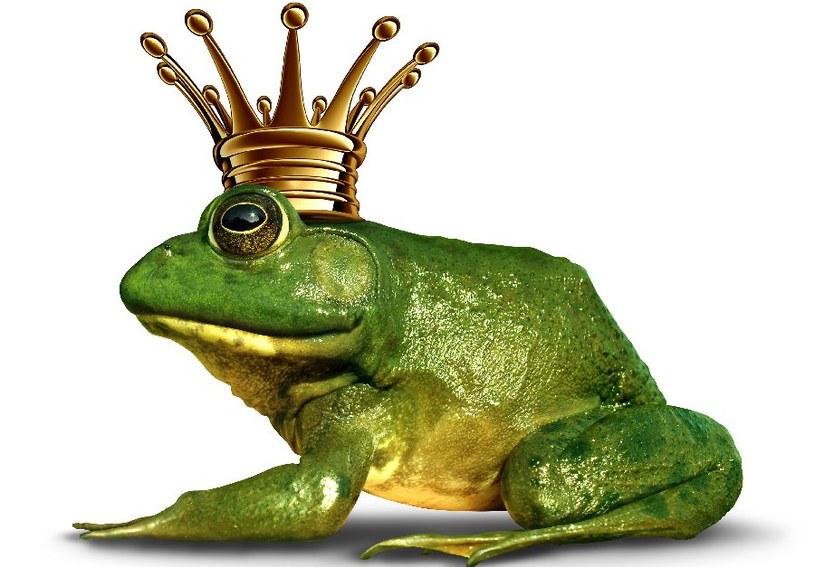 Żaba powinna mieć koronę /©123RF/PICSEL