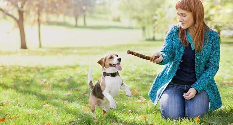 zabawa z psem /© Photogenica