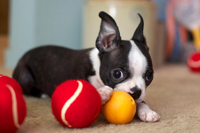 zabawki dla zwierząt /© Photogenica