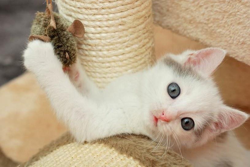 zabawki kota /© Photogenica