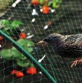 zabezpieczenie przed ptakami /© Photogenica