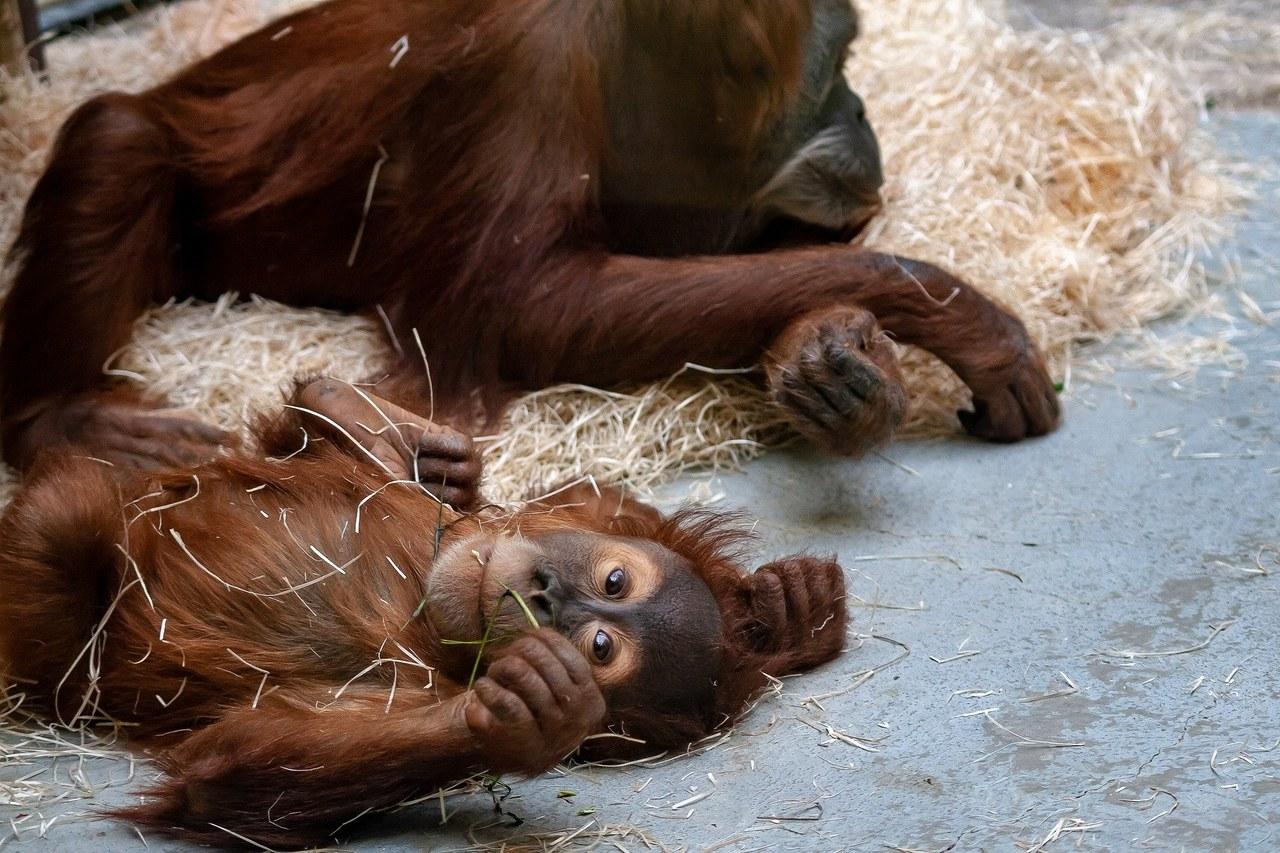Zabić zwierzęta na pokarm. Niemieckie zoo przygotowuje się na najgorsze