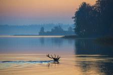 Zachodniopomorskie: Z jeziora wydobyto martwe jelenie