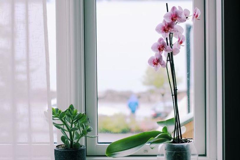 Zadbaj, by rośliny nie stały w przeciągu /123RF/PICSEL