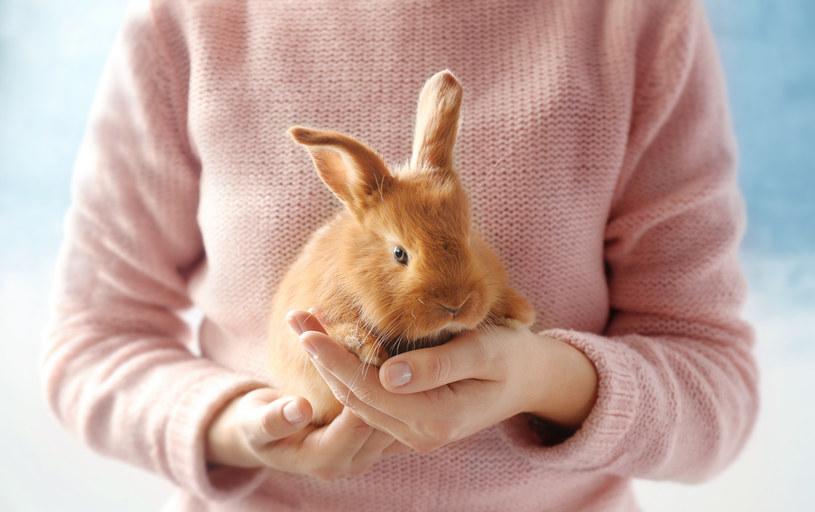 Zadbaj o komfort królika, gdy zaatakują go pchły /123RF/PICSEL