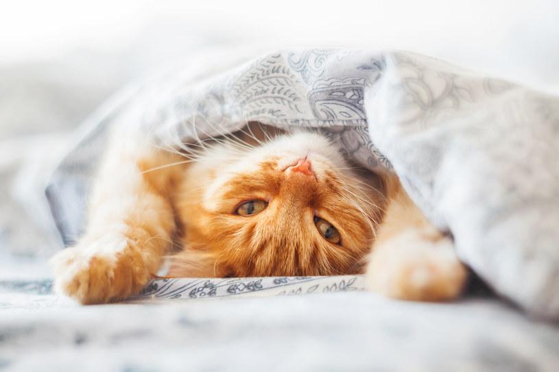 Zadbaj o kota /materiały prasowe