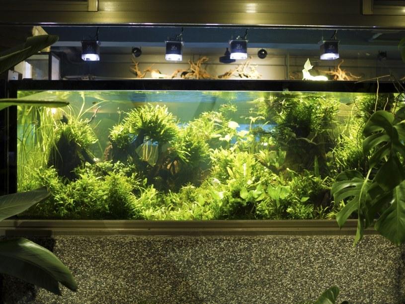 Zadbaj o oświetlenie akwarium /©123RF/PICSEL
