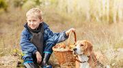 Zadbaj o psa  jesienią i zimą