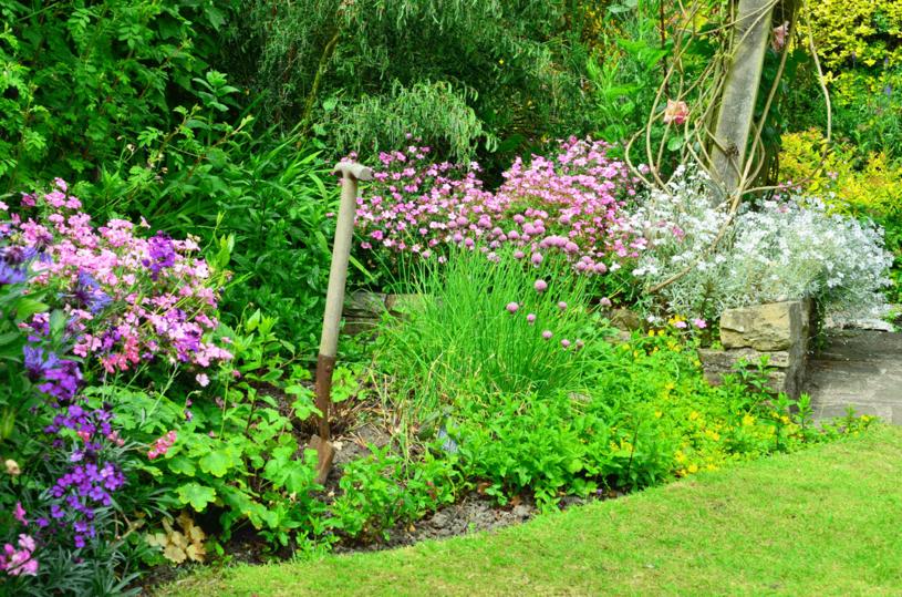 Zadbaj o rośliny, by cieszyć się pięknym ogrodem /123RF/PICSEL