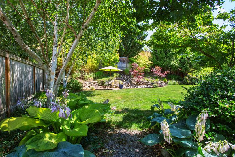 Zadbany ogród to miejsce odpoczynku dla całej rodziny /123RF/PICSEL