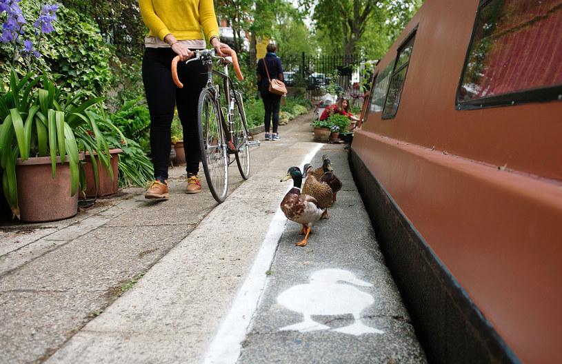 Zadowolone kaczki korzystają z nowych przywilejów /Bethany Clarke /Getty Images