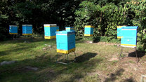 Zaglądamy do... ula. Oto cała prawda o pszczołach