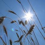 Zagrożenie suszą nie minęło. Kilka dni intensywnych opadów nie rozwiąże problemu