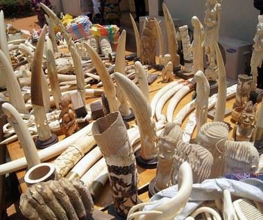 Zakaz handlu kośćią słoniową