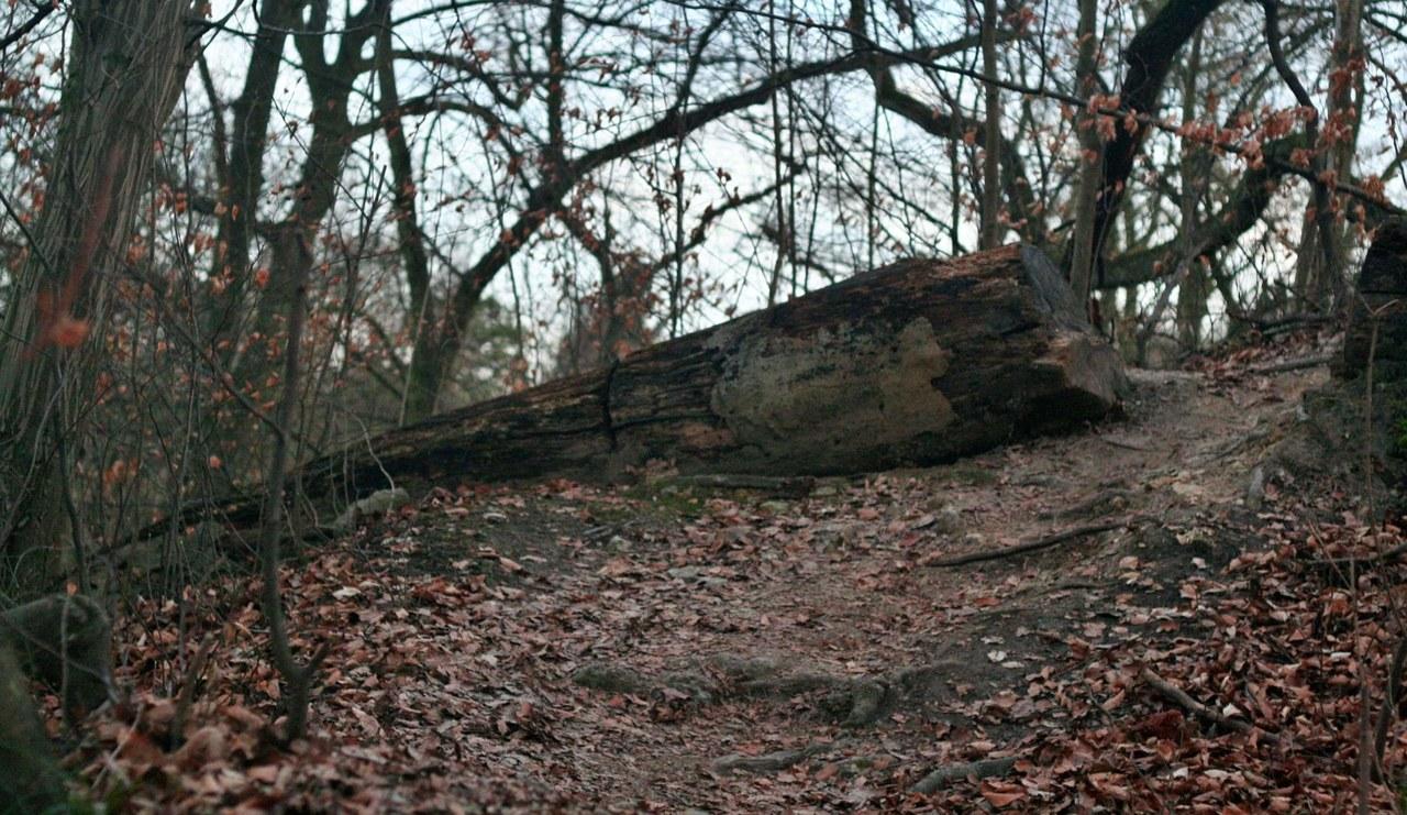"""Zakaz wstępu do lasów do 11 kwietnia. """"Dużo osób wykorzystuje czas odizolowania na pikniki"""""""