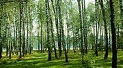 Zakaz wstępu do lasów