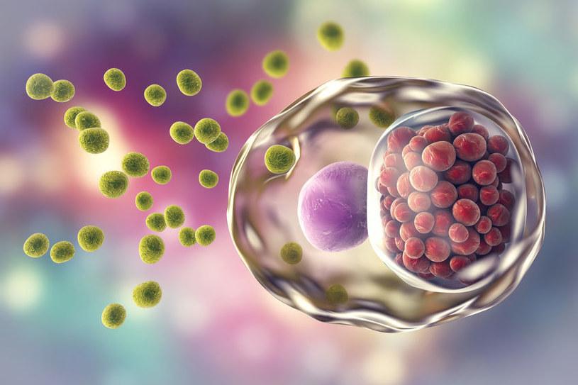 Zakażenie chlamydią może wywołać reaktywne zapalenie stawów /123RF/PICSEL