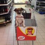 Zakupy razem z psem? Tam jest to możliwe!