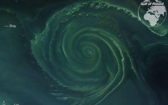 Zakwit fitoplanktonu ma już kilkadziesiąt kilometrów średnicy /NASA