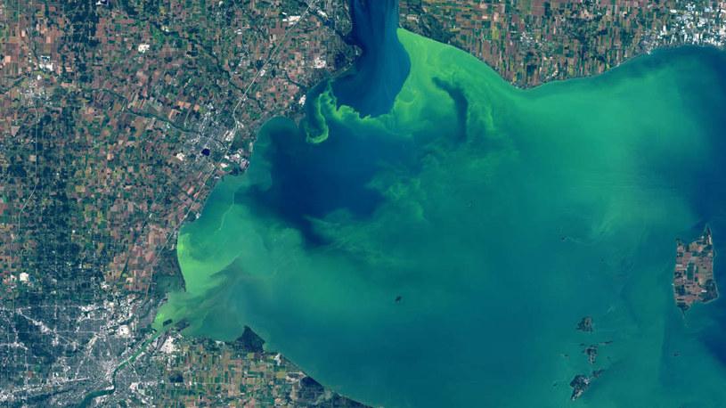Zakwit glonów na jeziorze Erie /materiały prasowe