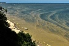 Zakwit sinic w Bałtyku. GIS: Zamknięto 11 kąpielisk