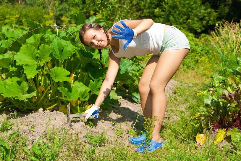 Zaledwie pół godziny pielenia ogródka pozwala spalić do 150 kalorii, a cięższe zadania, takie jak przycinanie żywopłotu, sadzenie roślin, grabienie to wydatek nawet 300 kalorii na godzinę /123RF/PICSEL