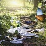 Zalew śmieci w polskich lasach